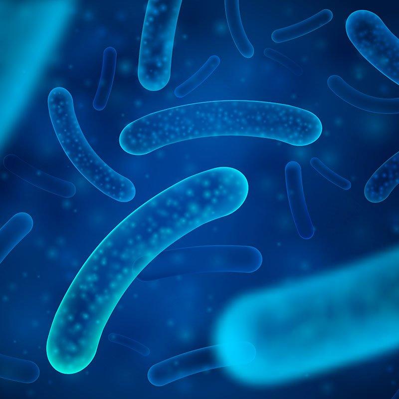 Bacteria Legionella